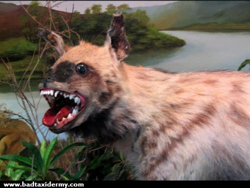 197_wild dog