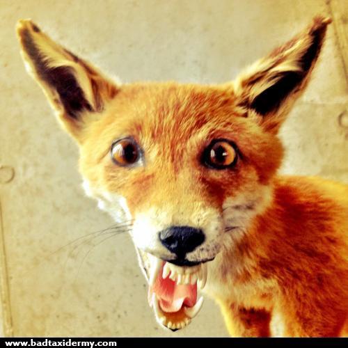 Derenged Fox