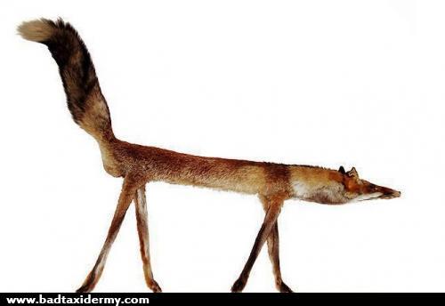 Straight Fox