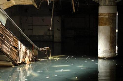 Un ecosistem format accidental într-un Mall abandonat din Bangkok