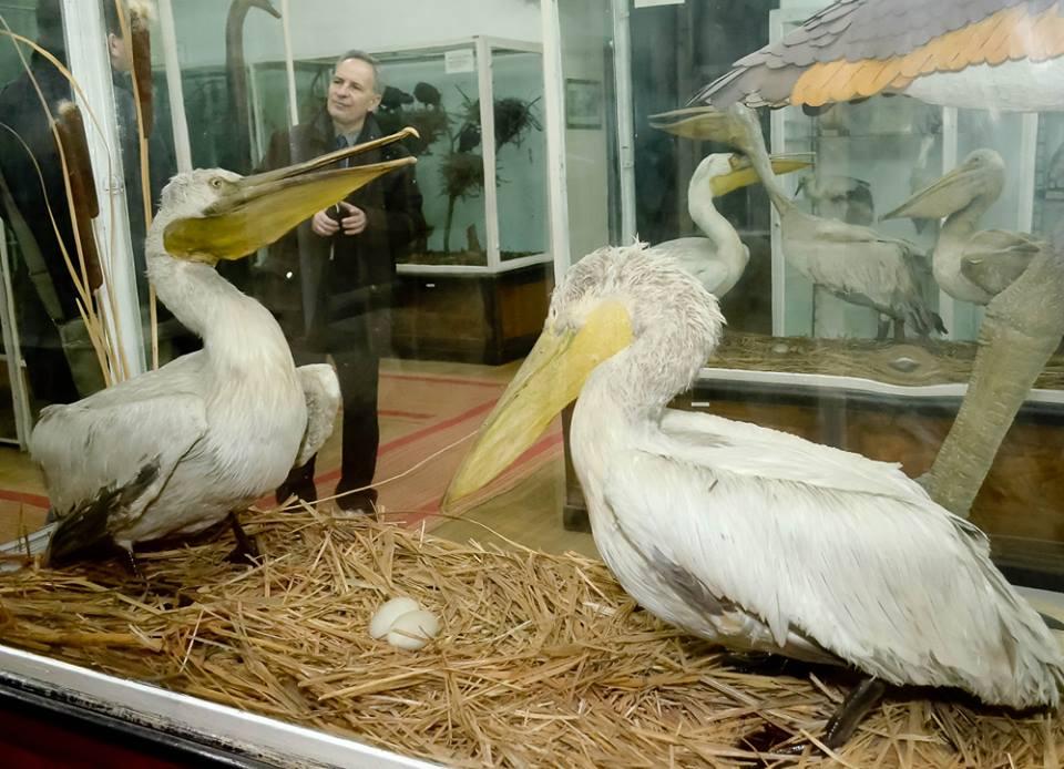 Muzeul Naţional de Istorie Naturală din Iaşi